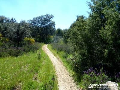 Piedra Escrita Diosa Diana; viajes puente de mayo; fines de semana;zapatillas para andar